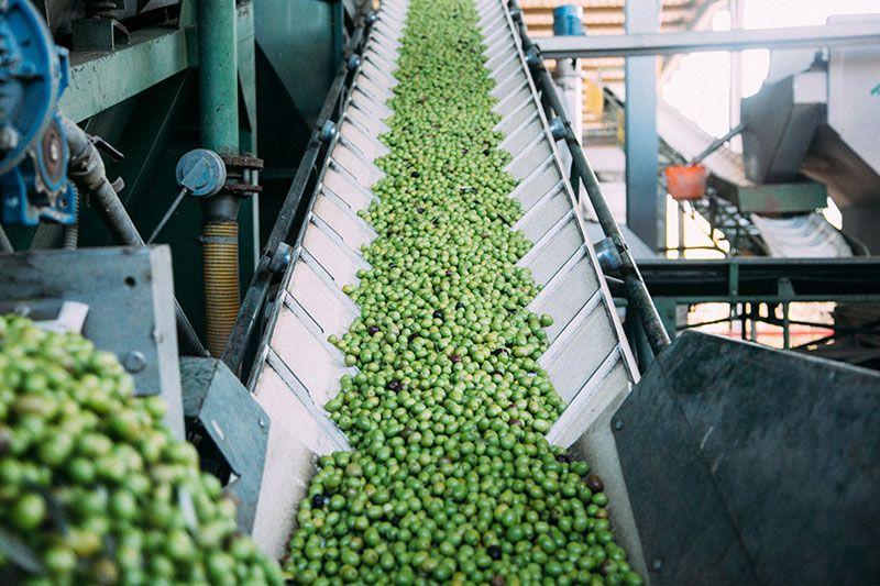 new harvest spanish olive oil 2020